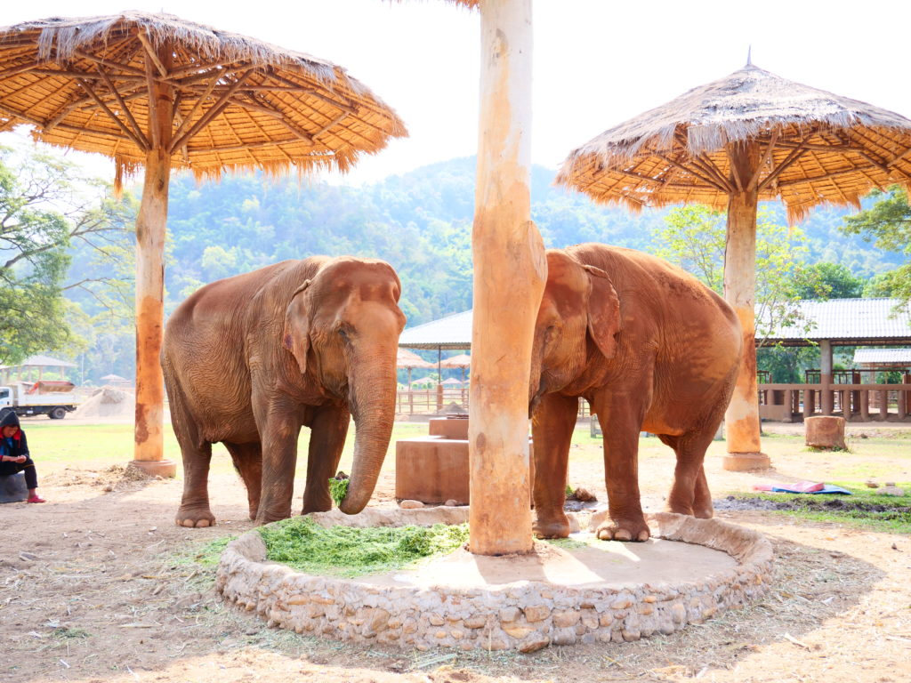 Elefant Nature Park Chiang Mai - Mit Baby in Chiang Mai Thailand